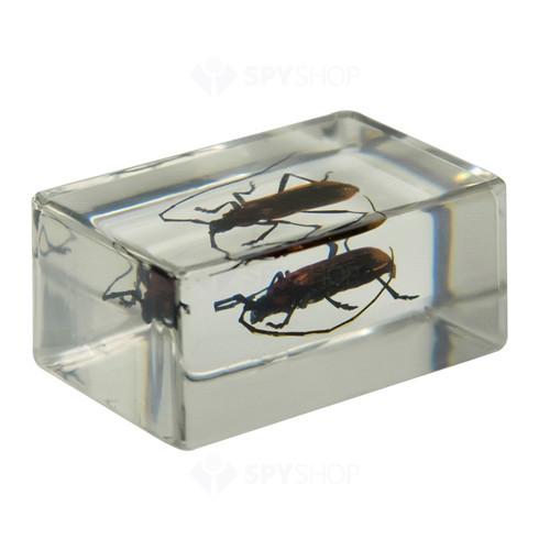 Set specimene de insecte 3D #1 Celestron 44407