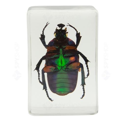 Set specimene de insecte 3D #2 Celestron 44408