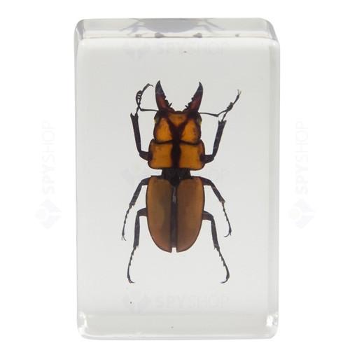 Set specimene de insecte 3D #3 Celestron 44409
